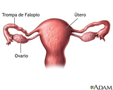 El ovario   Escuelapedia   Recursos Educativos
