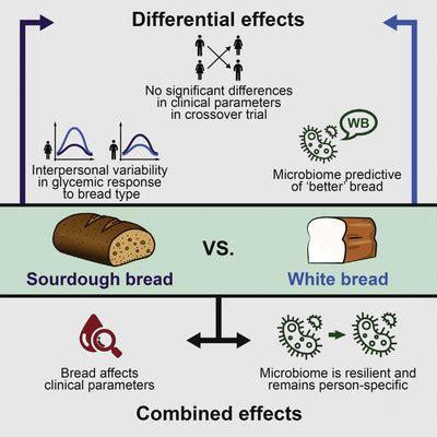El pan integral no es más 'saludable' que el blanco ...