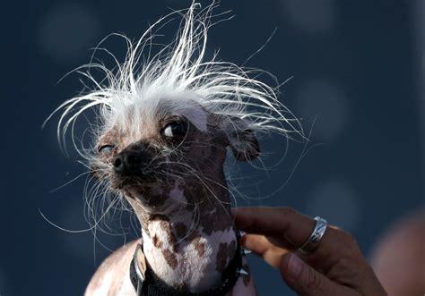 El perro más feo del mundo 2017 – Planeta Curioso