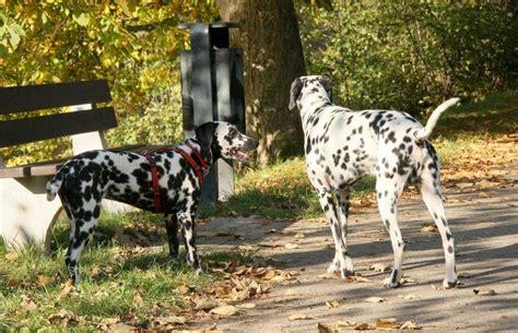 El perro y la comunicación: cómo entenderse con el perro ...