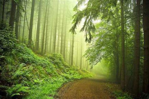 El poder curativo del bosque (I) | El Correo del Sol