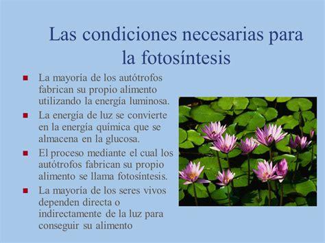 El Proceso de Fotosíntesis   Monografias.com