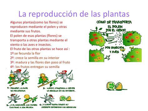 El reino de las plantas Paula Carreras