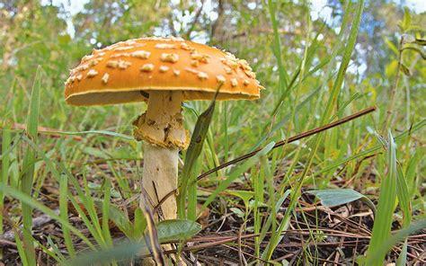 El reino de los hongos   El Sol de Cuernavaca