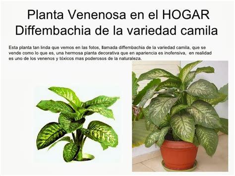 El rincón de los trastos: Plantas venenosas Vs Plantas ...