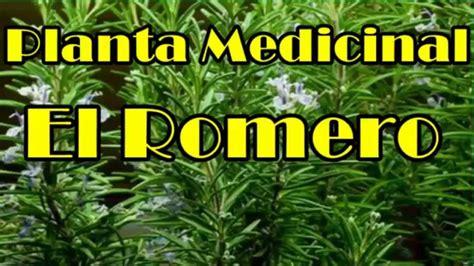 El romero, Planta Romero, Planta Milagrosa Con Muchas ...