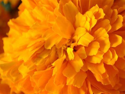 El significado de las flores | SoyActitud