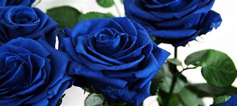 El significado de las rosas según su color - Verdissimo