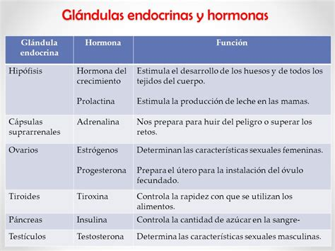 El sistema endocrino. - ppt video online descargar