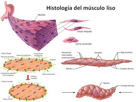 El sistema muscular I   Paperblog