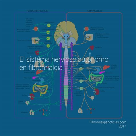 El sistema nervioso autónomo en fibromialgia ...