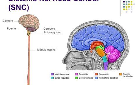 El Sistema Nervioso Central – Título del sitio