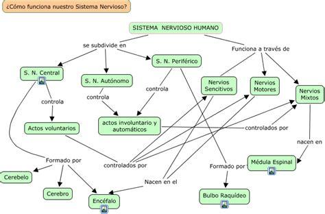 El Sistema Nervioso Humano   ? Cómo funciona el Sistema ...