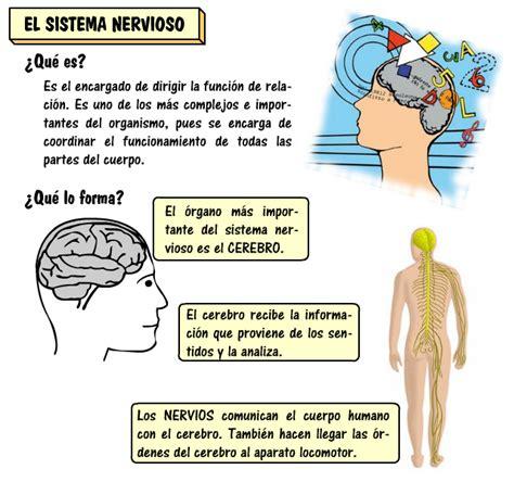 El sistema nervioso :: Tercero de Primaria