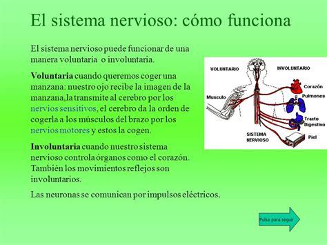 El sistema nervioso Vamos a contestar a las siguientes ...