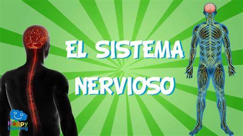 El Sistema Nervioso | Videos Educativos para Niños   YouTube