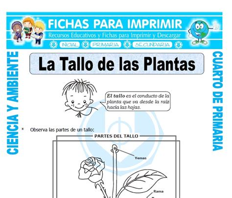 El Tallo y sus Partes para Cuarto de Primaria   Fichas ...