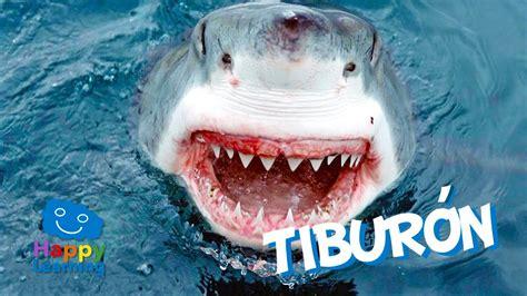 El Tiburón | Videos Educativos para Niños   YouTube