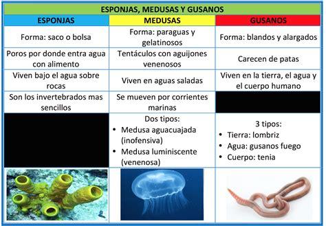 EL TRASTERO DE EDUCACIÓN PRIMARIA: A. Invertebrados ...