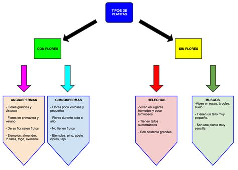 EL TRASTERO DE EDUCACIÓN PRIMARIA: Los tipos de plantas