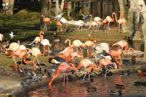 El Zoo cumple 40 años   Madrid   elmundo.es