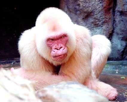 El Zoo de Barcelona está de cumpleaños - Viatges Manacor