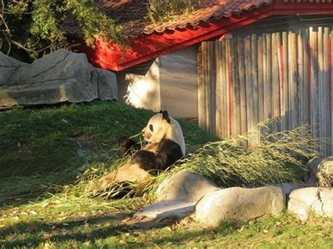 El zoo de Madrid celebrará la Semana de Toledo del 20 al ...