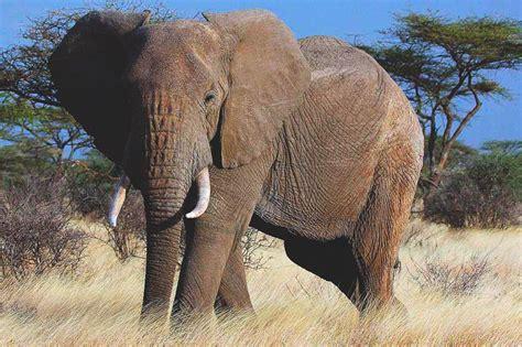Elefante Imagenes. Great Centro De Mesa Elefante ...