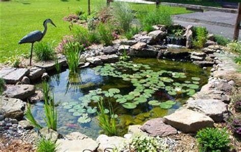 Elegir plantas para estanques: algunos consejos | Fundació ...