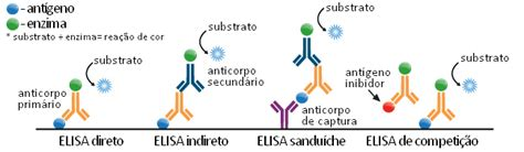 ELISA (Enzyme-Linked Immunosorbent Assay) | Biomedicina Padrão