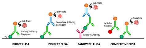 ELISA Fundamental Principle, How ELISA Works ...