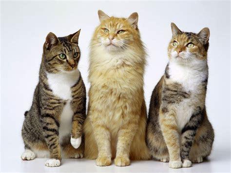 Em Defesa Dos Animais: Manual dos gatos
