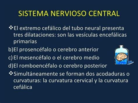 Embriologia del sistema nervioso