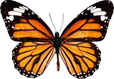 En Güzel Kelebek Resimleri