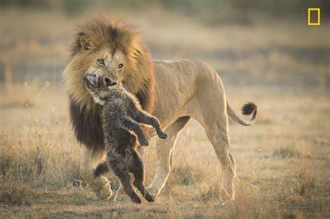 En imágenes: el concurso Fotógrafo de Naturaleza del Año ...