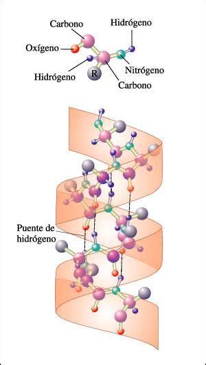 En los organismos se encuentran cuatro tipos diferentes de ...