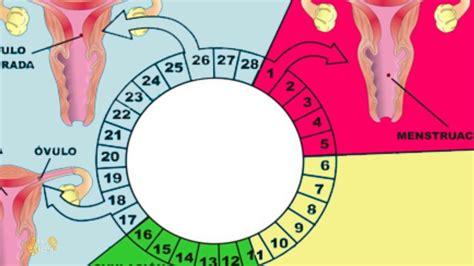 En que dia se produce la ovulacion despues de la ...