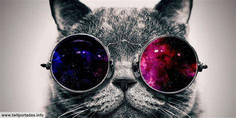 Encabezado para twitter de gato de otro espacio | Katia ...