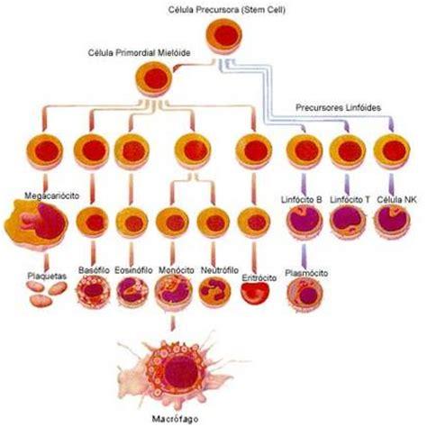 Enfermedad leucemia sintomas - Leucemia Sintomas
