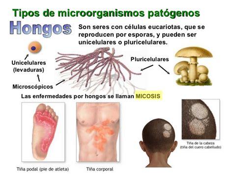 Enfermedades Infecciosas: microorganismos