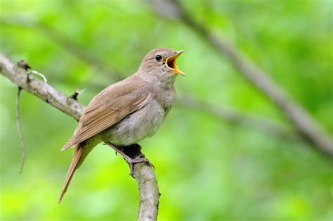 England Birding & Garden: Southeast Tour | Eagle Eye Tours