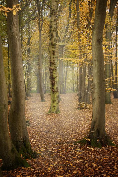 English Forest In Autumn Photograph by Ethiriel Photography