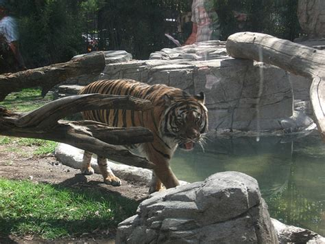 Enjoy a family day out at Chapultepec Zoo