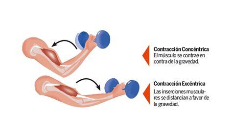 Entrenamiento excéntrico de la fuerza | Triatlonweb.es