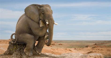 E' arrivato il momento di spostare l'elefante | Un mondo a ...