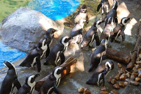 ESCAPADAS DESDE VIGO: Madrid con niños,el Zoo - Little Vigo