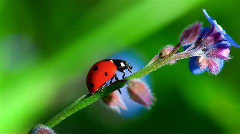 Escarabajo Mariquita Rojo Full HD en Fondos 1080