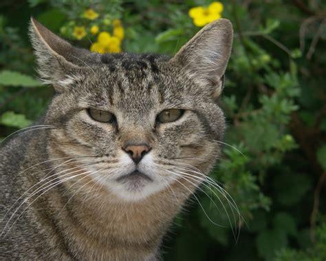 ESCRITORES Y CANALIZADORES: CONCIENCIA ANIMAL: DIVINIDAD ...