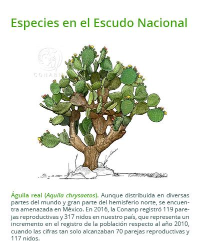 Escudo nacional: biodiversidad y símbolo cultural