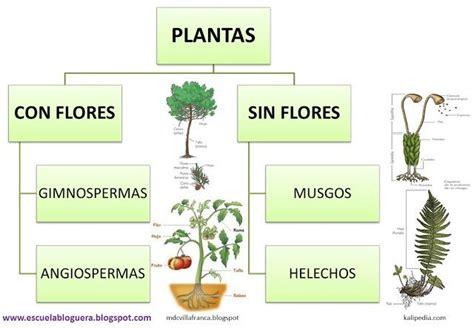 Escuela bloguera: Clasificación de las plantas | Ciències ...